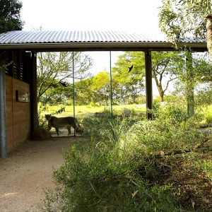 Werribee Zoo rammed earth project